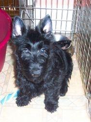 Max as a puppy