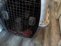 Pups in crate