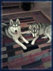 Zeoy & Lucy