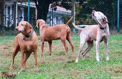 Darby, Riley, & Gwen