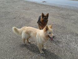 Dexter & Kyro