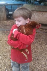 We Love Our Chickens!