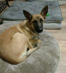 LUCY -- Adoption Pending!