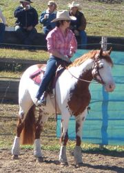 Navaar at cutting horse practice day