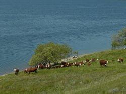 Summer pasture along Duncairn Dam