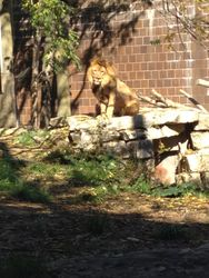 Some Sights At the Zoo