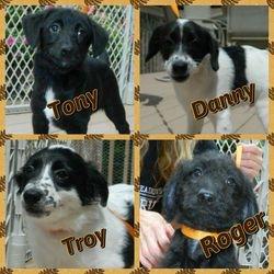 Tony / Danny / Troy / Roger