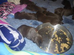 One pup shows an interest in kibble