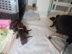 Pups initiate the clean digs