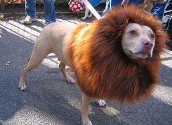 LEO THE LIONHEARTED