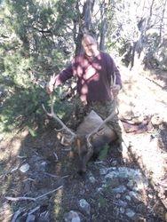 2013 GMU5BN Elk