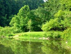Pine Lake Summer
