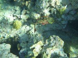 Snorkeling - US Virgin Islands