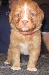 Puppy 3 - 4.5 weeks