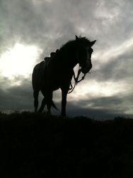 War Horse!