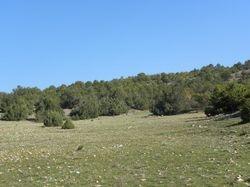 Juniper forest in Prespa NP.