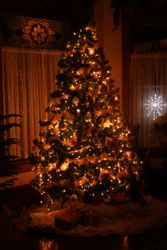 A Christmas tree at night