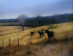 Beauty Lane Heifers
