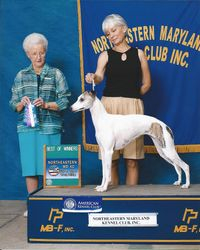 Lacey-Best of Winners under Judge Paula Hartinger