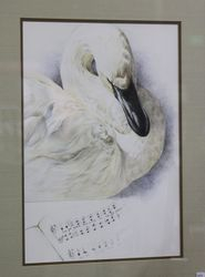 Bird art show
