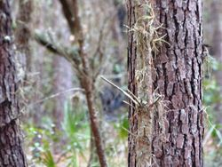 Unknown animal Pasco county woods