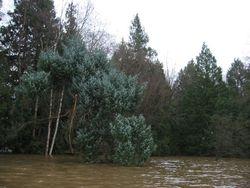 The West Cedar Woods.