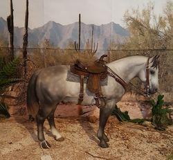 saddle set #95