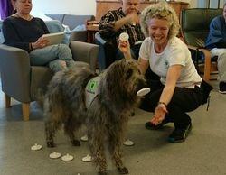 Terapihund som bingotrommel