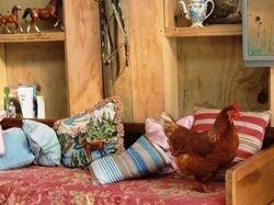 Eloise in the Barn