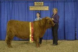 Reserve Champion Intermediate Heifer Flatheads Sileas