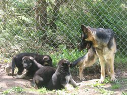 TAZZ AND HER BABIES PLAYING OUTSIDE