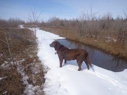 Koko's Birthday Walk at the lake