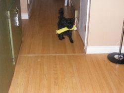Sampson fetching
