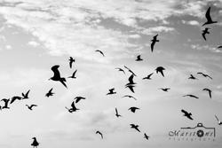 Birds B&W