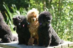 Alina, Bailey, Stina