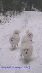 BROOKE, DAISY & KODA Winter 2010 hike