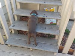 Maya takes the stairs up