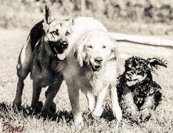 Dallas,Abby & Cooper