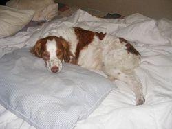 Kairo loves the bed!