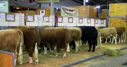 Mala-Daki Simmentals display