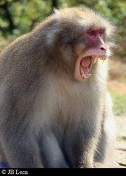 Male yawning