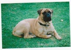 Amigo April 2008