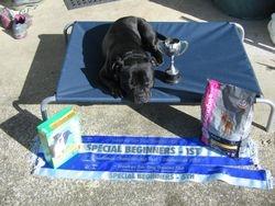 Hawkes Bay Dog Training Club 2012