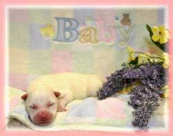 Miya & Max's pup