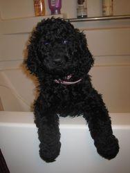 Before her bath. 7 weeks old.