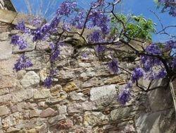 Barcelonan puut kukassa