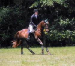 Theo @ Area 3 Championships - 3rd place Novice Horse