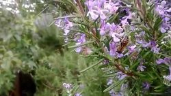 Rosemary, just all around the neighborhoods