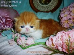 """WONDERFUL """" Ms GOLDEN in White Gloves"""" RED/WHITE FEMALE  IS  RESERVED FOR ANITA"""