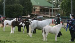4 years and over, under 14hh line up